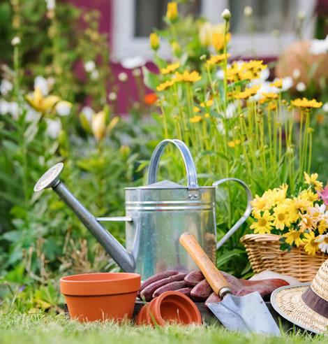 cuidamos de tus piscinas y jardines